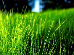Grass Wallpaper Plants Nature.