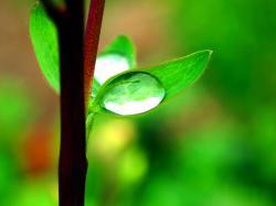 HD Morning dew plants nature wallpaper