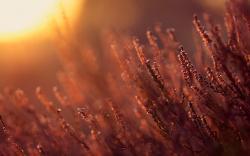 Plants Sunlight Summer Nature