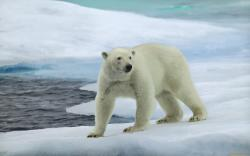 View And Download Cool Polar Bear Wallpaper ...