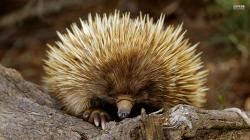 Let's Start with Transparency: I struggle to love porcupines. They bother me. I do know, however, that in the past, I could quickly become a porcupine if ...