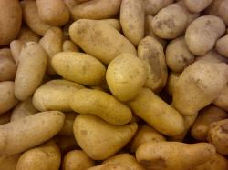 File:Potato 123.jpg