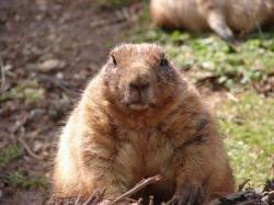 This Adorable Video Will Make You Instantly Fall in Love with Prairie Dogs   One Green Planet