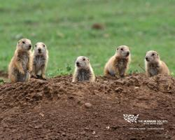 PHOTO GALLERY. All; COYOTES; GUESTS; HUNTS; PHOTOGRAPHY; PRAIRIE DOGS