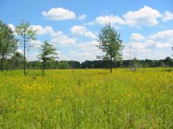 The Mnoké Prairie is an a lovely swath of restored grassland.
