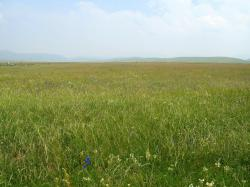 File:Prairie en Chine du nord.jpg
