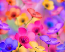 Flower Wallpapers - New Wallpaper