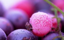 ... Berry Wallpaper HD ...