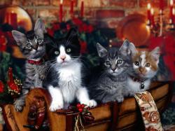 Pretty Christmas Screensavers 21655 1600x1000 px