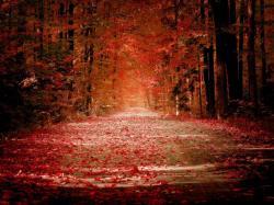 Pretty Fall Background 42070 2560x1600 px