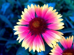 Pretty Flower Wallpaper Images