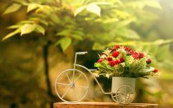 Pretty Flower Pot Wallpaper 42737 1680x1050 px