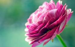 ... Pretty Flowers Wallpaper ...