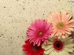 pretty-ness! - flowers Wallpaper