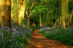 Beautiful Skin » path-in-the-forest-beautiful-beauty-big-trees-colorful-colors-flowers-forest-grass-green-leaves-lovely-nature-path-peaceful-plants-pretty- ...
