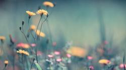 Hd Pretty Garden Wallpaper