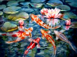 Beautiful Koi Fish