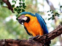 Beautiful Macaw Wallpaper