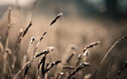 ... Nature Macro Wallpapers · Nature Macro Wallpapers