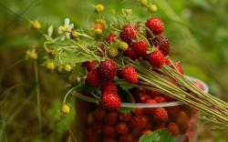 Pretty Strawberry Wallpaper 16002