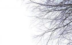 Twig Wallpaper · Twig Wallpaper ...