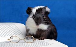 Professor hamster