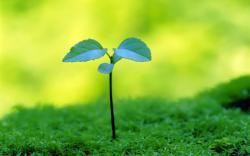Pullulate Plant