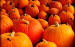Autumn Pumpkin Wallpaper