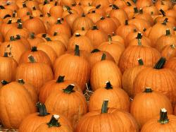 Hd Pumpkin Wallpaper: Pumpkin Wallpaper Tera 1600x1200px