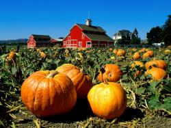 When growing pumpkins there are so many different ways to use the celebrated fall holidays to provide a fun environment for the surrounding community and is ...