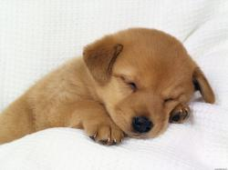 puppy4 300x225 15 adorable puppy photos to look at next time Roman Reigns grabs a microphone