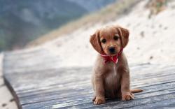 Adorable Puppy Face Wallpaper