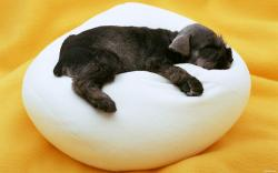 Puppy sleep pillow