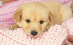 Puppy Wallpaper Desktop 12723 Hd Wallpapers