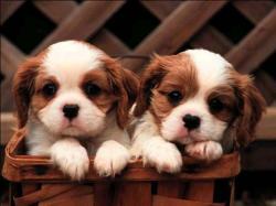 love-puppy-wallpaper puppy-hd-wallpaper ...
