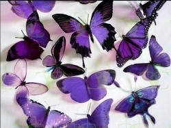 Butterflies Purple Butterflies