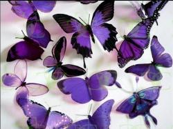 Butterflies Purple Butterflies