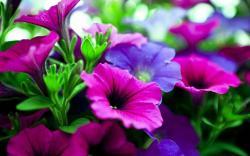 Pink purple flowers