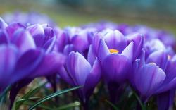 Fantastic Purple Flowers ...
