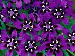 Purple Flowers desktop wallpaper