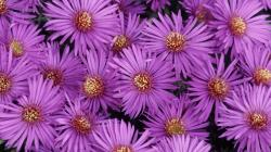 Purple Flowers · Purple Flowers · Purple Flowers ...