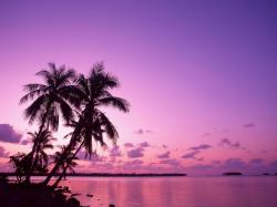 Purple Beach Sunset