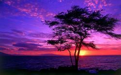 Purple Sunsets