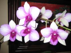 This purple-white orchid was blooming in my treatment room over Christmas of 2010. On Christmas Eve, my guides asked me to make a flower essence to support ...