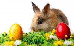 Rabbit easter eggs