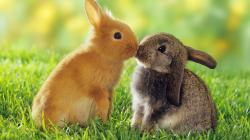 ... Rabbits HD Wallpapers ...