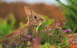 Rabbit nose flowers