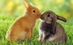 The Pet Rabbit – 15 things you should know…. - Vital Pet Health - Ask the experts