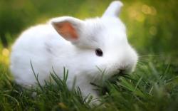 Rabbit Wallpaper 2