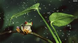 Frog Rain Wallpaper Photos HD